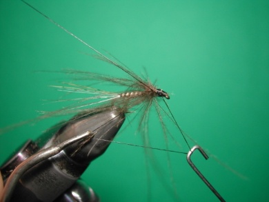 Fly tying -  CDC May fly Spent - Step 9