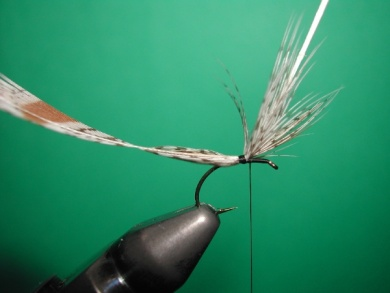 Fly tying - May fly partridge and CDC - Step 2