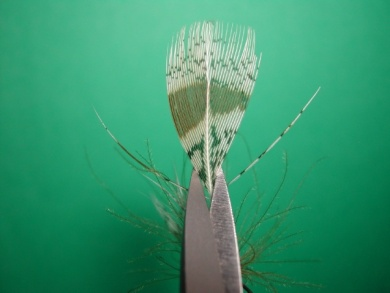 Fly tying - May fly partridge and CDC - Step 7