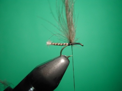 Fly tying - Midge with stripped peacock body. - Step 9