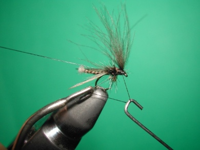 Fly tying - Midge with stripped peacock body. - Step 18