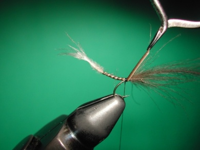 Fly tying - Midge with stripped peacock body. - Step 7