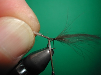 Fly tying - Midge with stripped peacock body. - Step 6