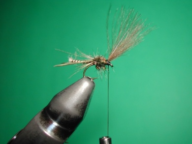 Fly tying - Midge with stripped peacock body. - Step 16