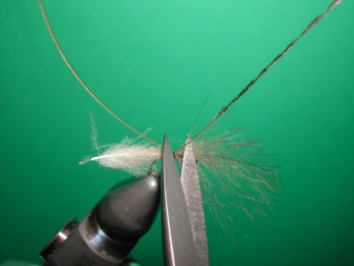 Fly tying - Midge with stripped peacock body. - Step 3