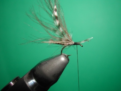 Fly tying - Midge with stripped peacock body. - Step 13
