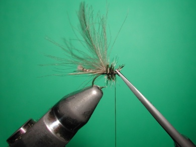 Fly tying - Midge with stripped peacock body. - Step 15