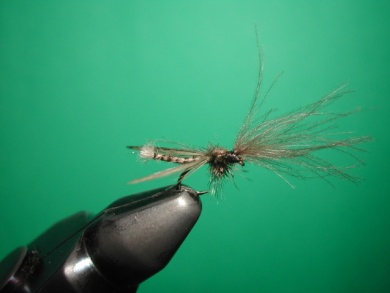 Fly tying - Midge with stripped peacock body. - Step 19