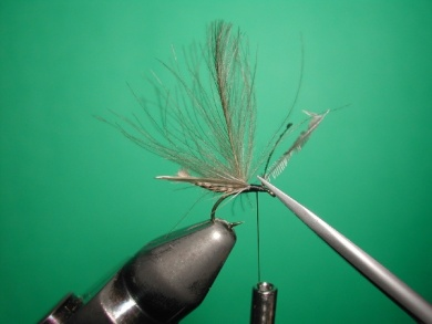 Fly tying - Midge with stripped peacock body. - Step 12