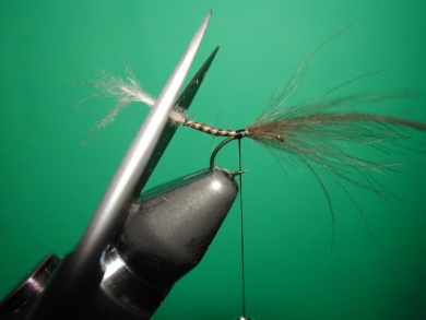 Fly tying - Midge with stripped peacock body. - Step 8