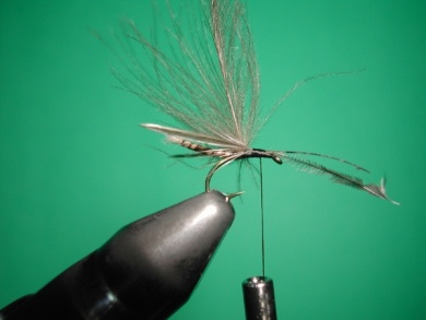 Fly tying - Midge with stripped peacock body. - Step 11