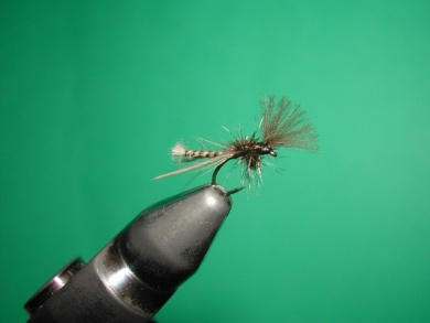 Fly tying - Midge with stripped peacock body. - Step 20