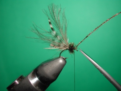 Fly tying - Midge with stripped peacock body. - Step 14