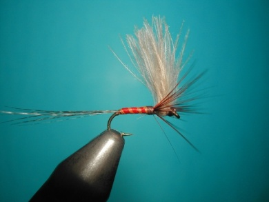 Fly tying - Split forward hackles - Step 14