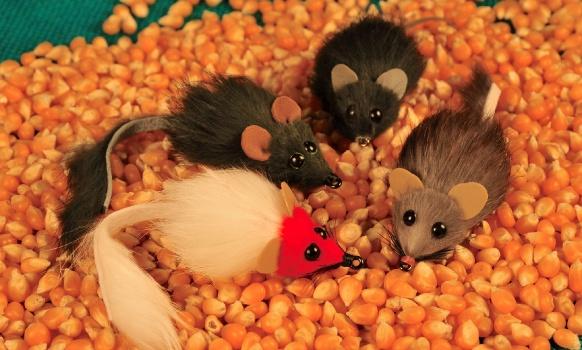 COMENTARIOS: No hay ninguna duda acerca de la efectividad que tienen las imitaciones de ratones para casi cualquier tipo de pez cazador. Me vienen a la mente recuerdos de dorados con dos o tres colas de ratones saliendo por la comisura de la boca, grandes marrones con la panza abultada de roedores o pescad a ultima hora en varios ríos donde una imitación de ratón  nos dio la mejor marrón o el mas electrizante corte.   En mis cajas conviven amigablemente imitaciones de ratones de varios tipos, de pelo de ciervo, pelo de ciervo y foam y de conejo como la que vemos hoy. Hace muchos años ví en una revista un ratón atado por Davy Wotton con un bajo cuerpo de esponja enroscada y arriba una tira de conejo  también enroscada hacia adelante. El modelo era muy convincente pero la esponja no lo hacía flotar muy bien y al rato al mojarse el cuero y la esponja el ratón bajaba mas de los deseado, pero las truchas lo aceptaban muy bien. Años mas tarde apareció el foam y con el cuerpos de todo tipo por lo que comencé a experimentar atando ratones con foam adentro. Todavía no había buenos pegamentos en gel y costaba que la tira de conejo se mantuviera en su sitio por lo que había que reforzarla con hilo pero esto tampoco duraba mucho. Cuando aparecieron los primeros cianoacrilatos en gel se me ocurrió olvidarme del hilo y pegar la tira al foam. Cuero, foam y adhesivo en gel se llevan muy bien y si elegimos la tira de cuero buscando una donde el cuero sea fino y compacto una vez pegada es casi imposible arrancarla del foam sin que se rompa. Así de a poco fui llegando al ratón que vemos hoy que es muy sencillo de atar, muy real, funciona de maravilla en el agua y es extremadamente versátil ya que cambiando el anzuelo y el grosor del cuerpo interno de foam o usando lastre en algún punto podemos hacer que nade, derecho o con la cabeza levantada y lograr que flote mucho, o venga algo mas aplacado en la superficie. El conejo que uso es cortado cross cut, un material muy común y siempre di