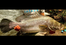 Nile Perch