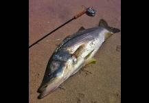 Lago Monroe Informe De Pesca 12-12